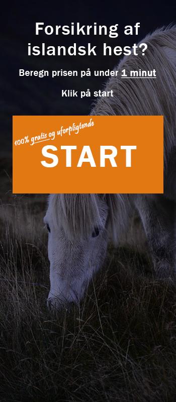forsikring af islandsk hest